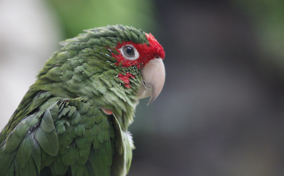 Ezra's Parrot Processed