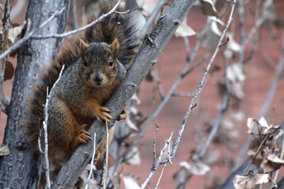 Suspicious Squirrel