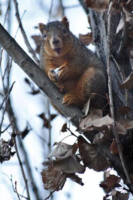 Squirrel Surprise Processed